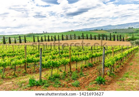 Amazing landscape - vineyards in countryside, Italy. #1421693627