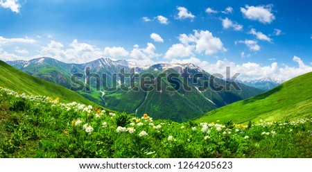 Amazing mountain landscape in Georgia on sunny summer day. Alpine green meadow in Caucasus highlands. Idyllic valley in Svaneti mountains.