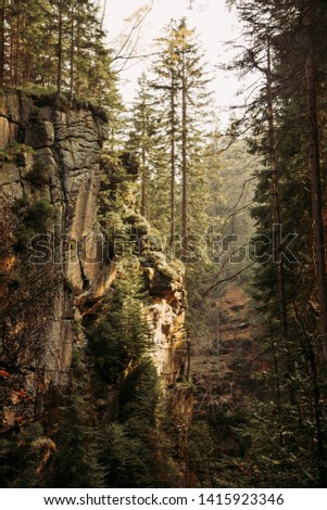 Amazing mountain ravine full of pine trees growin on rocks