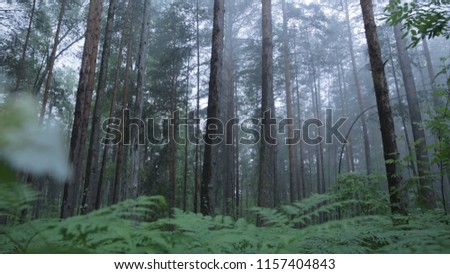 Amazing mystical forest with fog. Scene. Misty mystical forest