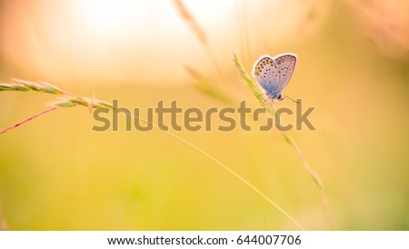 Amazing nature background concept with bright sunny meadow and a beautiful butterfly