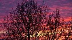 Amazing nature background: tree against dramatic and moody pink, purple and blue cloudy sunset sky