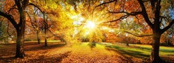Amazing panoramic autumn scenery in a park, the sun casts beautiful rays through the foliage