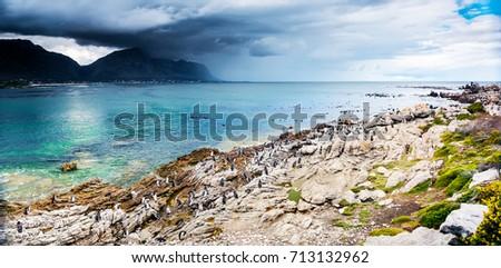 Amazing panoramic landscape of Betty's Bay, many penguins on the stony coast near Atlantic Ocean, wildlife safari, beautiful wild nature of South Africa