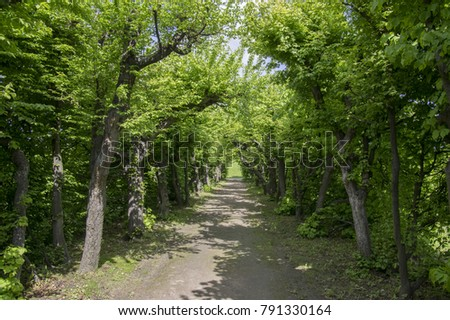Amazing path framed by deciduous trees  #791330164