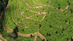 Amazing Pattern of Ceylon Tea Plantation From Above Made By a Drone in Sri Lanka Between Ella and Haputale