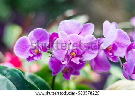 Amazing pink Orchid with copy space for text. Orchids are amazing flowers and also elegant. Pink orchid flower on green background, florist shop, exotic flowers decorations.