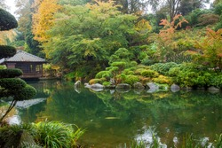 Amazing  pond and nature , carps KOI  in japanese garden in Kaiserslautern. The beauty of nature in Germany - leaves fall off