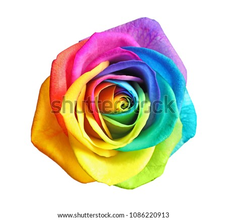 Amazing rainbow rose flower on white background #1086220913