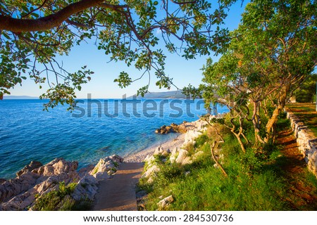 Amazing rocky beach with crystalic clean sea water with pine trees on the coast of Adriatic Sea, Istria, Croatia