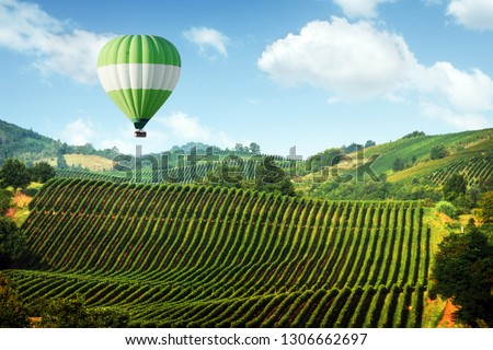 Amazing rural landscape with green balloon under vineyard on Italy hills. Vine making background