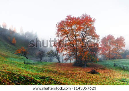 Amazing rural scene on autumn valley. Small mountain village in fantastic morning sunlight. Carpathians, Ukraine, Europe. . Landscape photography