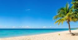 Amazing sandy beach with coconut palm tree and blue sky, Cuba, Caribbean Islands