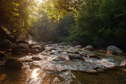 Amazing scenic view forest with river on background green trees in the morning or evening rays of the sun. beautiful landscape with magic smoke and sun rays