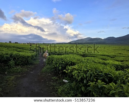 Amazing scenic view of traditional farmer in tea plantation with beautiful volcano mountain in Kerinci ,Indonesia . #513857236