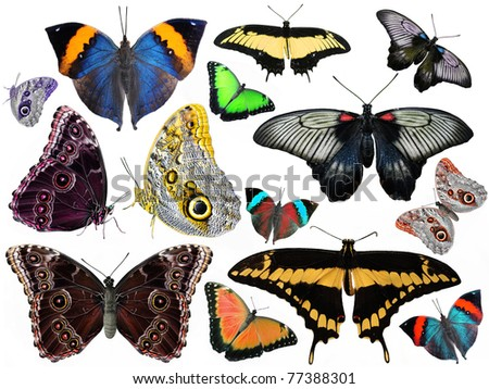 amazing set of butterflies isolated on white