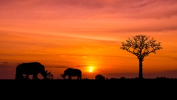 Amazing Silhouettes of wild African Rhino sunset safari animals vector.orange light in the evening.The silhouette of the dead tree.