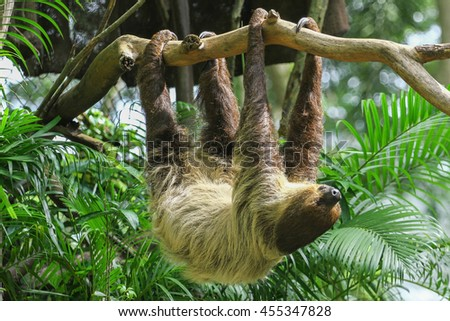 amazing Sloth in the air