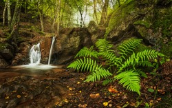 Amazing small hidden waterfall on a hike through a forest. Wonderful autumn scene with fern, small stream and water falling from the rocks. Quiet, clean and beautiful. Fresh outdoor air.