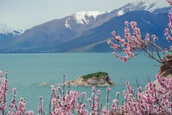 Amazing spring view from Akdamar Island surrounded by blossoming trees, Lake Van, Turkey. Focus on pink flowers.