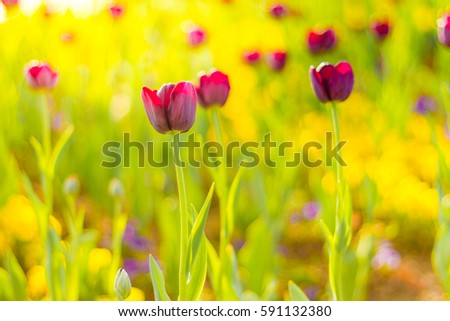 Amazing summer nature flowers, pink tulips and sunlight day landscape. Natural view spring summer flower blooming in the garden green grass background. Sunny day zen garden colorful nature background