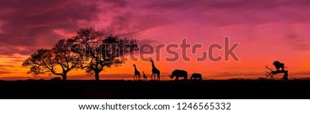 Amazing sunset and sunrise.Panorama silhouette tree in africa with sunset.Tree silhouetted against a setting sun.Dark tree on open field dramatic sunrise.Safari theme.Giraffes , Lion , Rhino.  Photo stock ©