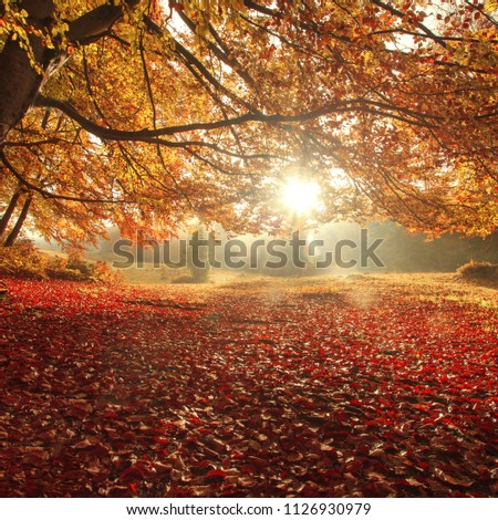 amazing sunset landscape, meadow in fairy sunlight in autumn beech forest, scenic colorful image, beautiful atmosphere of nature, Carpathian mountains, Ukraine, Europe