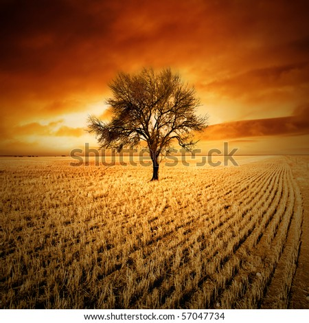 Amazing sunset over a tree in a field