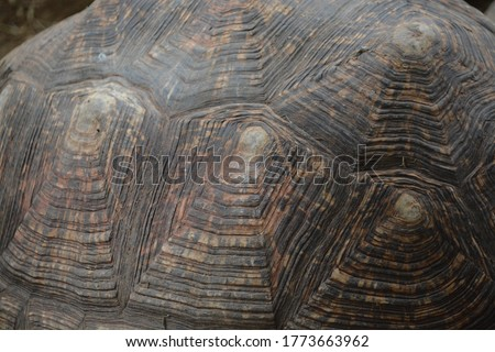 amazing texture of tortoise shell