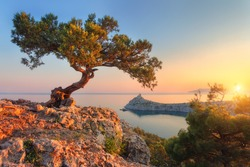 Amazing tree growing out of the rock at sunset. Colorful landscape with old tree with green leaves, blue sea, mountains and sky with sun in the evening. Summer travel in Crimea. Nature background