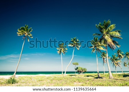 Amazing tropical beach landscape with palm trees and turquoise ocean waves.  Green leaves swaying in wind at sunny day. Romantic relaxation and vacation at tropics. Luxury travel destinations #1139635664