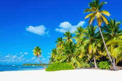 Amazing tropical beach with palm tree entering the ocean against azur ocean, gold sand and blue sky, Dominican Republic, Caribbean Islands