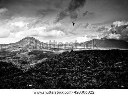 Amazing tropical landscape of mountains and flying birds. Indonesia - Bali. Black-white photo.