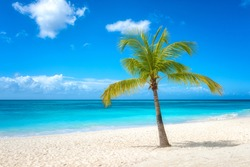 Amazing tropical paradise beach with white sand, coconut palm, sea and blue sky, outdoor travel background, summer holiday concept, natural wallpaper. Caribbean, Saona island, Dominican Republic