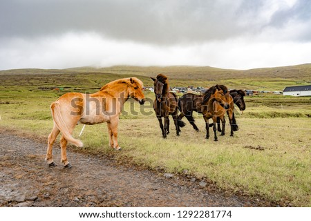 Amazing view of brown horses in rural farm grazing green grass in cloudy weather sky in Faroe Islands, North Atlantic, Europe hidden travel destination. #1292281774