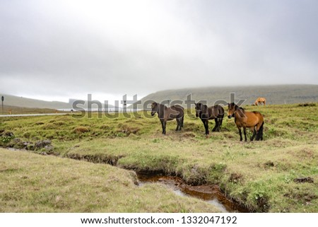 Amazing view of brown horses in rural farm grazing green grass in cloudy weather sky in Faroe Islands, North Atlantic, Europe hidden travel destination. #1332047192
