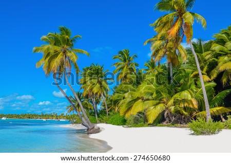 amazing view of caribbean beach ...