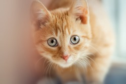 amazing view of the little cat