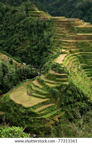 Amazing view of the Rice Terrace, Philippines