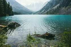 Amazing view to meditative ripples on azure clear calm water of mountain lake. Small flower grows in transparent turquoise water with relax waves. Atmospheric scenery of alpine lake and conifer trees.