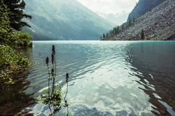 Amazing view to meditative ripples on azure clear calm water of mountain lake. Small violet flower of larkspur grows in transparent turquoise water with relax waves. Atmospheric scenery of mountains.