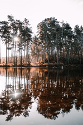 amazing views from the forest. sun rays coming through the trees at Cannock Chase. Reflections and symmetry