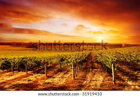 Amazing Vineyard Sunset in South Australia