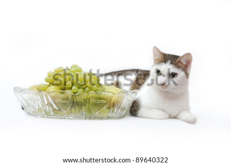 Amazing white cat lying near to crystal vase with grapes and pears on the white background