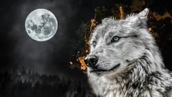 Amazing wild wolf