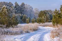 Amazing winter landscape with a snowy dirt road in the forest, birches, pines and grass in hoarfrost against the background of a blue sky in severe frost