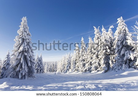 amazing winter landscape with snow and blue sky