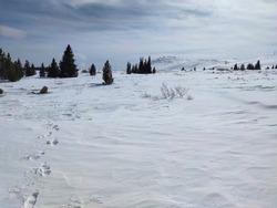Amazing Winter panorama of Vitosha Mountain, Sofia City Region, Bulgaria