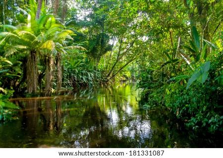 amazon jungle  yasuni  ecuador
