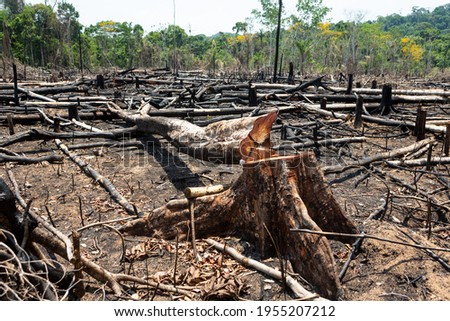 Amazon rainforest illegal deforestation landscape view of trees cut and burned to make land for agriculture and cattle pasture in Para, Brazil. Concept of ecology, environment, global warming.